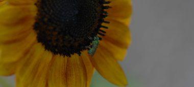 cropped-dsc_0141.jpg
